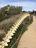 Image for Whale Spine - San Diego, CA