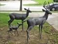 Image for Deer Family - Denton, TX