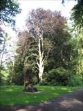 Image for Arboretum Bukovina - Czech Republic