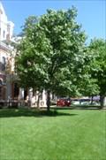 Image for Washington Memorial Tree  -  Pontiac, IL