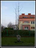 Image for Tree of John Paul II. - Tychy, Poland
