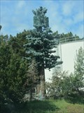 Image for Pine Tree Tower - San Bruno, CA