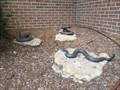 Image for Western Diamondback Rattlesnake - Denton, TX