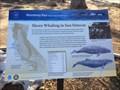 Image for Shore Whaling in San Simeon - San Simeon, CA