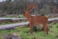 Image for Fallow Deer - Benderse NL