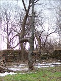 Image for 20 Mile Creek Elbow Tree