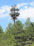 Image for Pine Tree Cell Tower - Monument Hill, CO