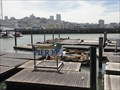 Image for Weeks After Disappearing, Sea Lions Return To Pier 39  -  San Francisco, CA