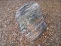 Image for Petrified Wood - Kissimmee, FL