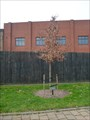 Image for Holocaust Victims and Survivors - Stoke, Stoke-on-Trent, Staffordshire.