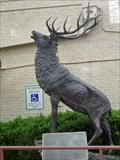 Image for Elk - Denton, TX