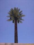 Image for Talking Tree - Catalina & Roger - Tucson, AZ