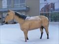 Image for Le Cheval du Hobby Horse.   -Mirabel.  -Québec.