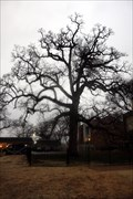 Image for Muscogee Creek Council Oak -- Tulsa OK
