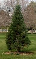 Image for Sequoia in City of Orem Arboretum - Orem, Utah