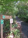 Image for Woodland Walk, CAT, Corris, Gwynedd, Wales, UK