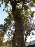 Image for Arboretum - Rochefort,Fr