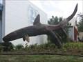Image for Sharks - Port Isabel - Texas