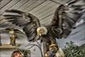 Image for National Eagle Center - Wabasha MN
