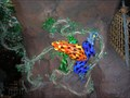 Image for Poison Arrow Frog at the Rainforest Cafe