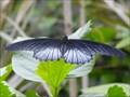 Image for Serre aux papillons, Parc Floral Orléans, Loiret, France