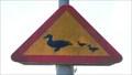 Image for Watch the Ducks! - Oskarshamn, Sweden