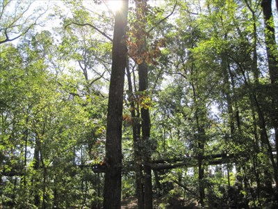 This view of the bridge is from Storza Woods, located in the Atlanta Botanical Garden.