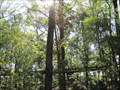 Image for Kendeda Canopy Walk