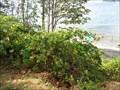 Image for Kitsilano Beach Berry Bush - Vancouver, BC
