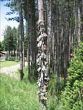 Image for Shoe Tree - Primrose, ON