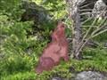 Image for Wolves - Sherman Pass, Washington