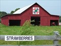 Image for Ohio Rose at Larry Thompson Produce Barn-Jonesborough,TN