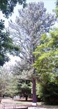 Image for Ivy Green Moon Tree - Alabama