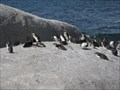 Image for Boulders Penguin Colony, Simon's Town, South Africa