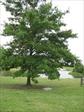 Image for Mellennium Tree, Ponca City, Oklahoma