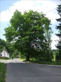 Image for Red oak in Poustka / Cerveny dub v Poustce