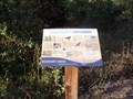 Image for Song Birds - Boundary Creek Natural Resource Area - Moorestown, NJ