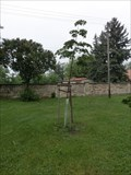 Image for The tree of liberty - Dlouhopolsko, Czech Republic
