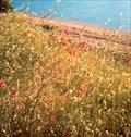 Image for Field of Wild Flowers - Sorkuncak, Turkey