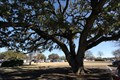 Image for John Peter Smith Oak -- Fort Worth TX