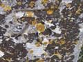 Image for Cut Bench mark - Milestone,  Amesbury Bridleway - Wilt's