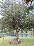Image for Eugene Whelen Tree, Gemini Springs Park - DeBary, FL