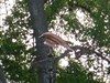Photo avec angle différent de la girouette.  Photo with different angle the windvane.