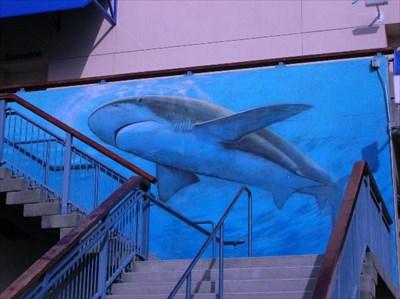Shark Aquarium Of The Bay Pier 39 San Francisco
