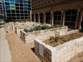Image for YMCA Townlake Community Garden - Austin, TX USA