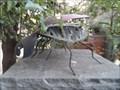 Image for Ladybug - Encinitas, CA