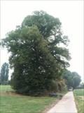 Image for Kwartjesboom, Val-Meer, Riemst, Limburg, Belgium