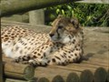 Image for Paradise Wildlife Park - White Stubbs Lane, Broxbourne, Hertfordshire, UK