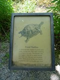 Image for Pond Turtle - Trail to Antelope and Buffalo Springs - Sulphur, OK