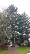 Image for VA  Hospital Moon Tree - Roseburg, OR